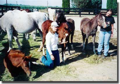 Girls in foal pen