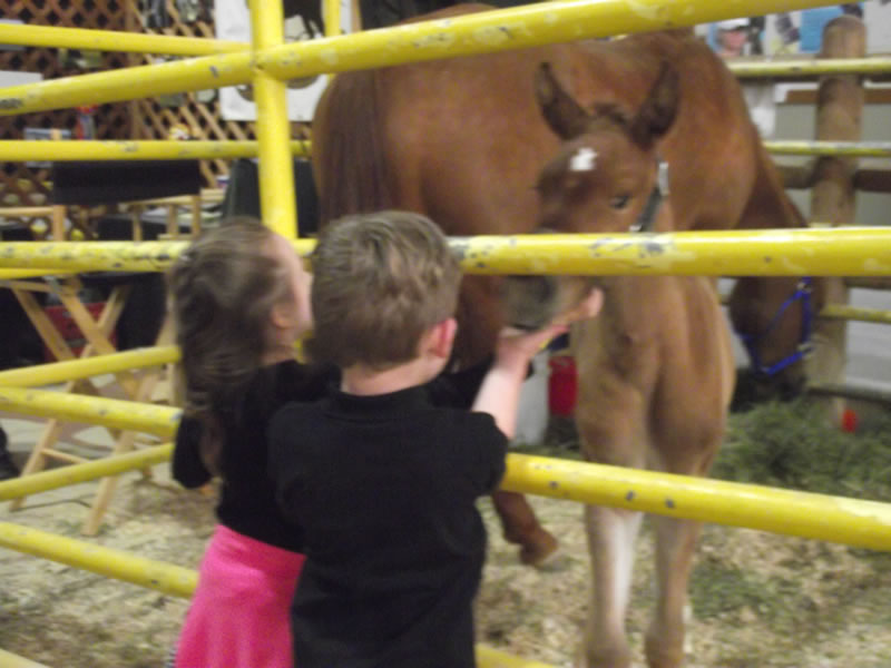 kids petting horse at expo